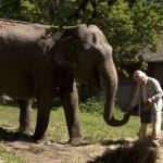 100-year-old-man-elephant_758_426_81_s_c1